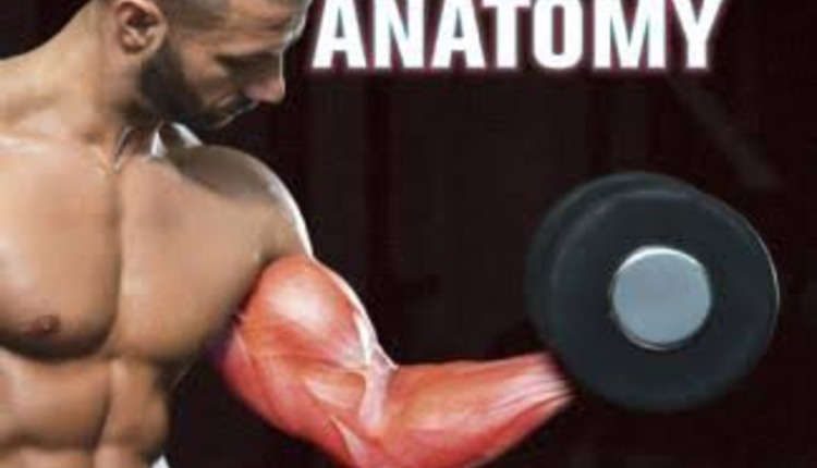 freeweight-training-anatomy