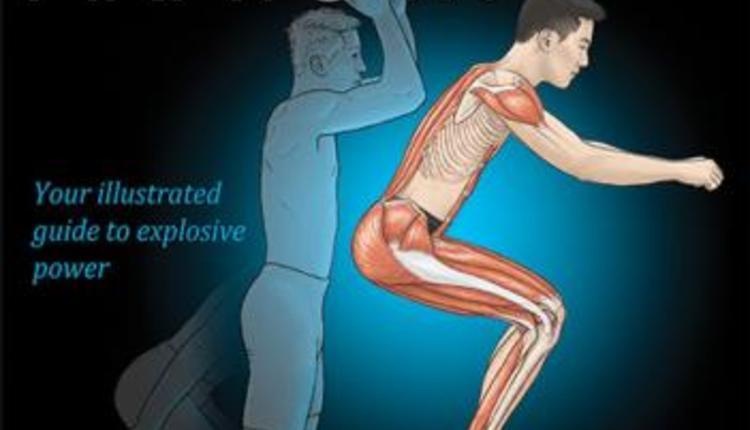 plyometric-anatomy